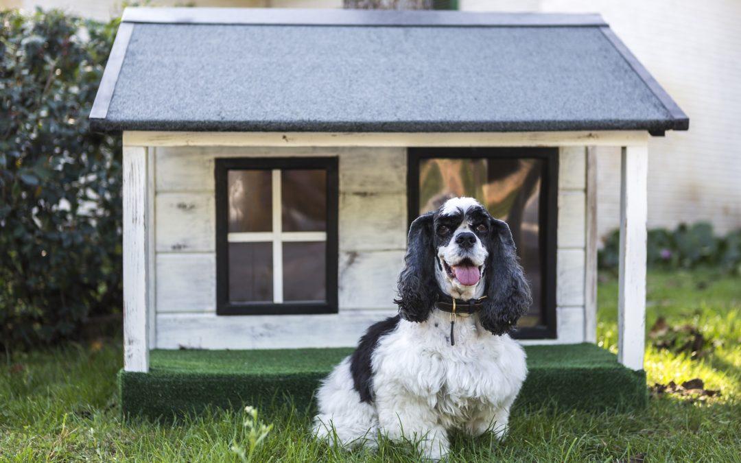 4 consejos para construir una caseta de perro en el jardín