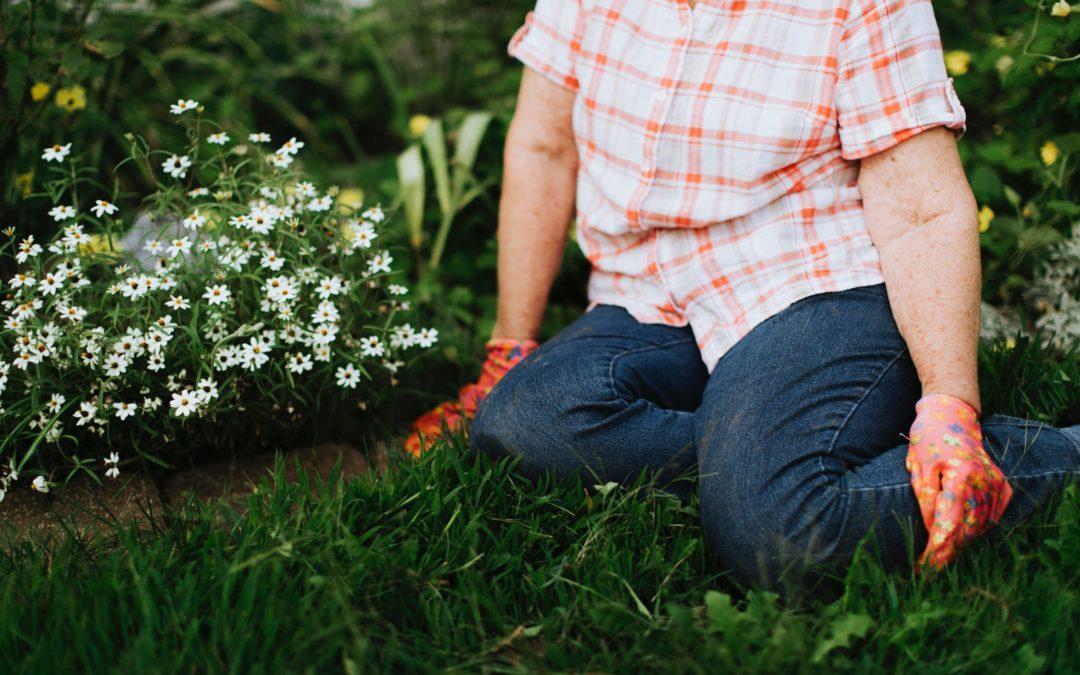 Consejos para tu jardín